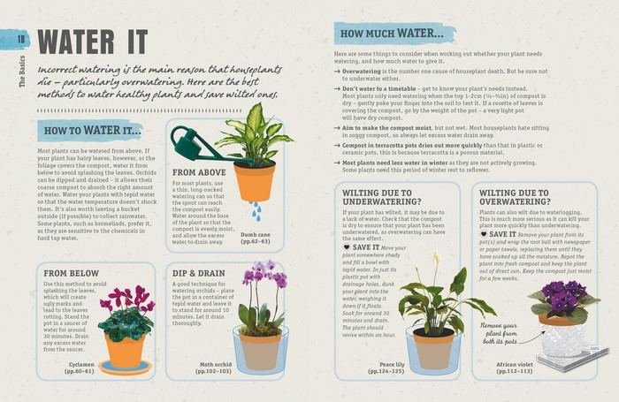 how not to kill your house plant
