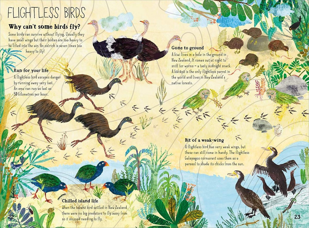 The Big Book of Birds by Yuval Zommer   9780500651513   Booktopia