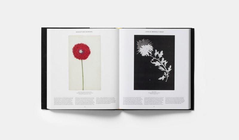 Booktopia plant exploring the botanical world by editors phaidon take a look inside solutioingenieria Choice Image