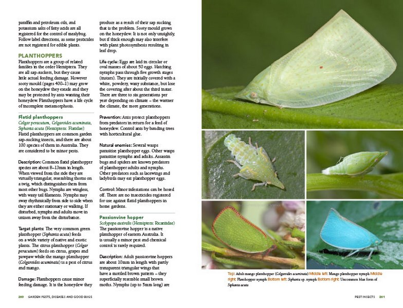 Garden Pests, Diseases and Good Bugs