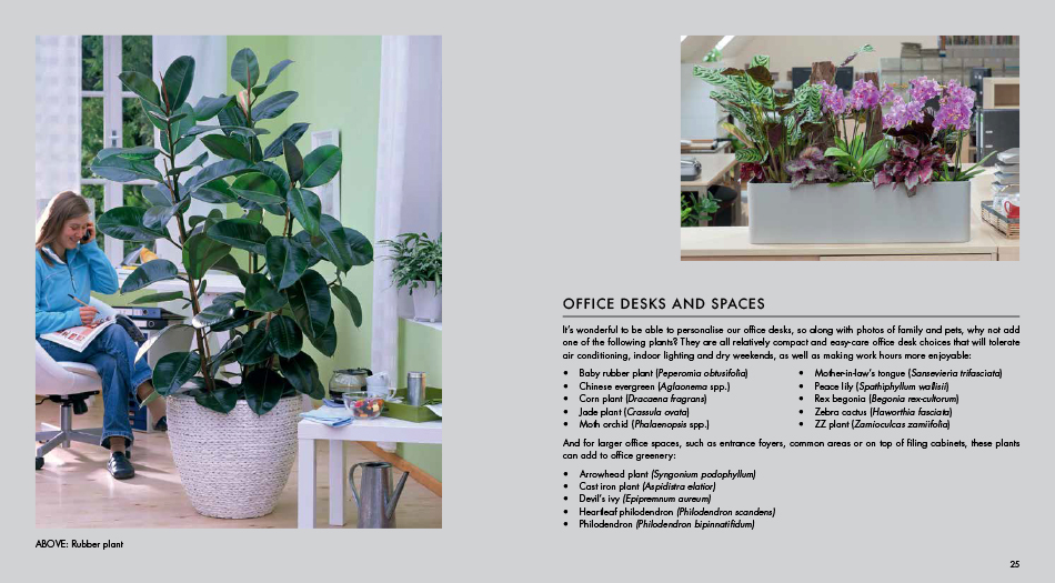 Yates Top 50 Indoor Plants And How Not To Kill Them! by Angie Thomas on replanting houseplants, easy houseplants, beautiful houseplants,
