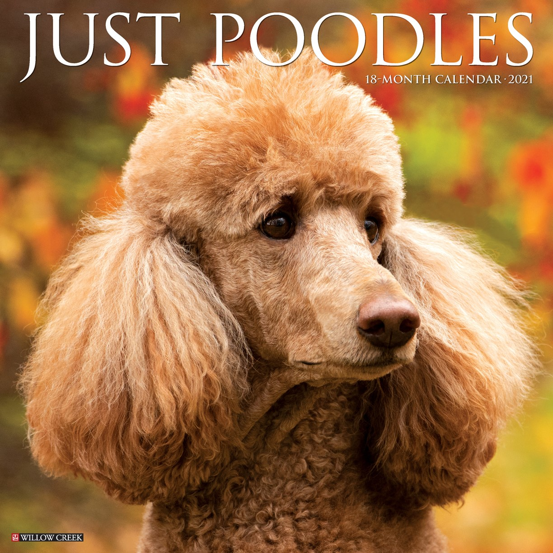 Just Poodles 2021 Wall Calendar Dog Breed Calendar By Willow Creek Press 9781549212994 Booktopia