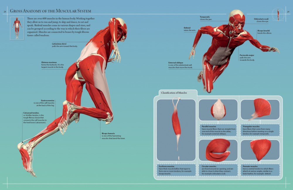 Anatomy 360, The Ultimate Visual Guide to the Human Body by Dr