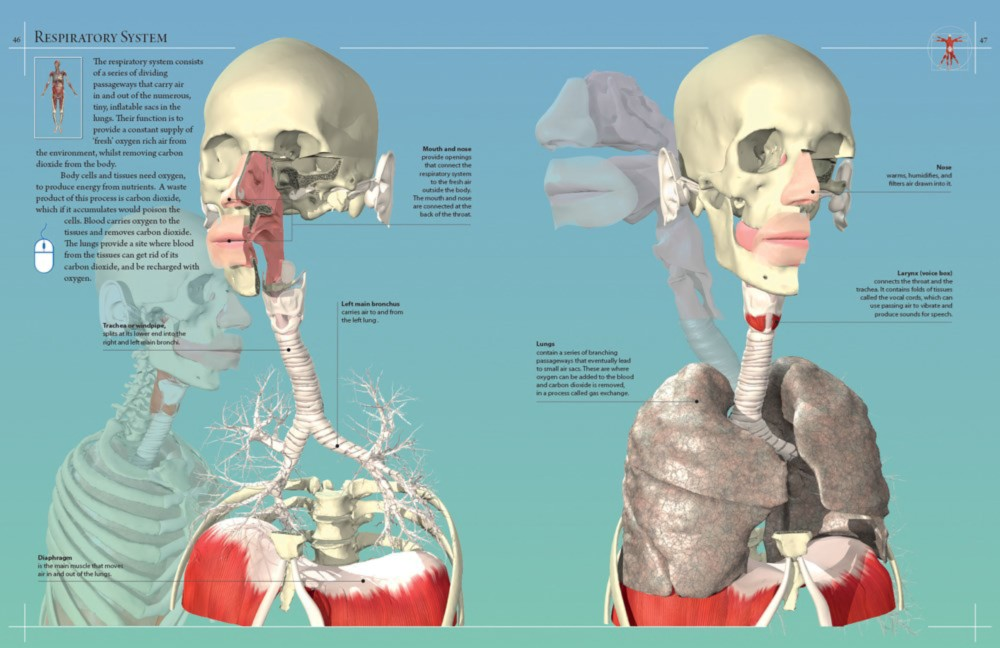 Booktopia - Anatomy 360, The Ultimate Visual Guide to the Human Body ...