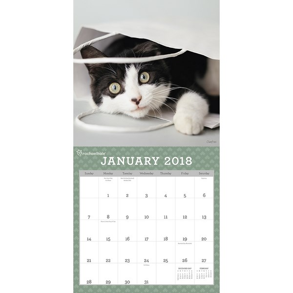 Booktopia   Rachael Hale Cats   Calendar 2018 , 16 Month Wall