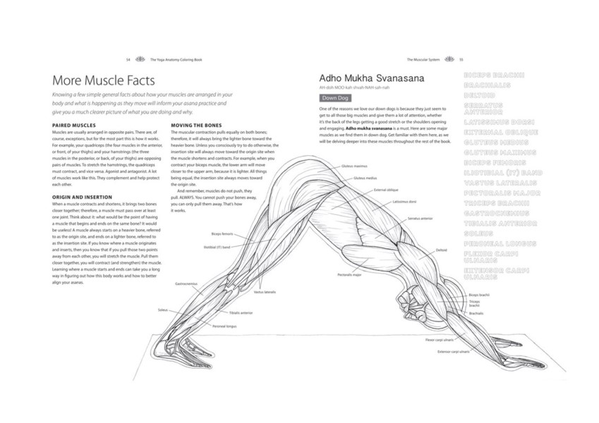 The Yoga Anatomy Coloring Book A Visual Guide To Form Function And Movement By Kelly Solloway 9781640210219 Booktopia