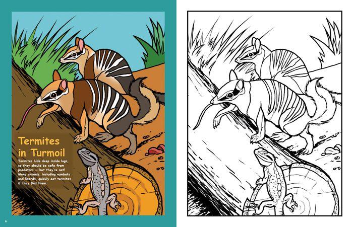 Steve Parish Kids Australian Bushland Colouring Book