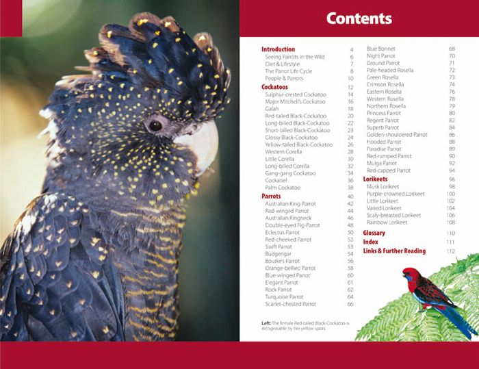 Parrots, A Wild Australia Guide by Steve Parish | 9781741933260