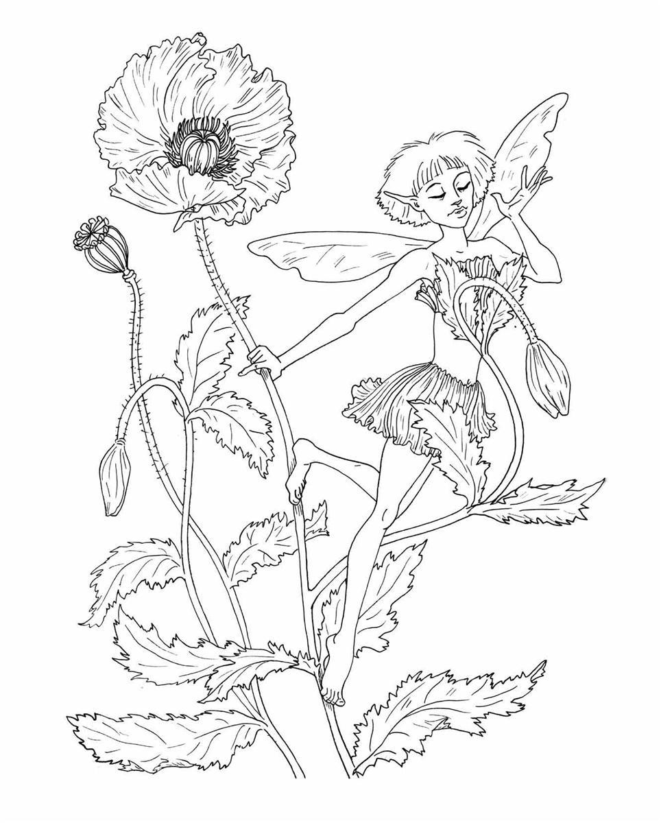 Booktopia - Fairies Colouring Book, Adult Colouring Books ...
