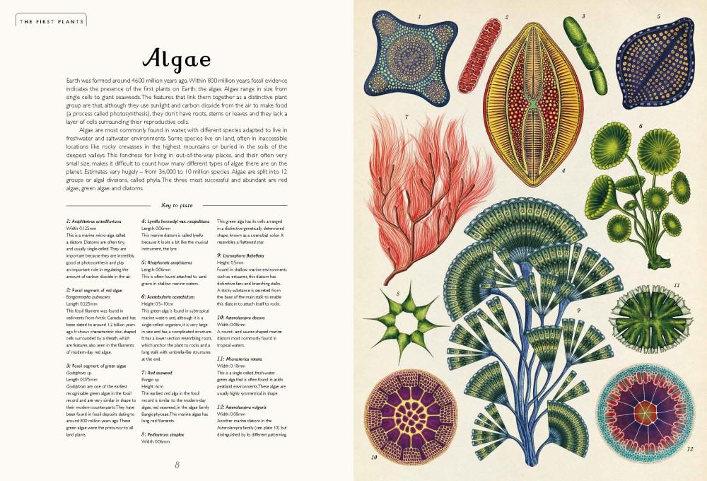 Booktopia - Botanicum by Kathy Willis, 9781760403423. Buy