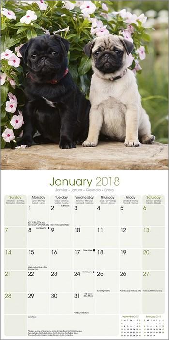 Doug The Pug 2019 Wall Calendar Dog Breed July 15th RELEASE RRP 2999 2775 PRE ORDER Take A Look Inside