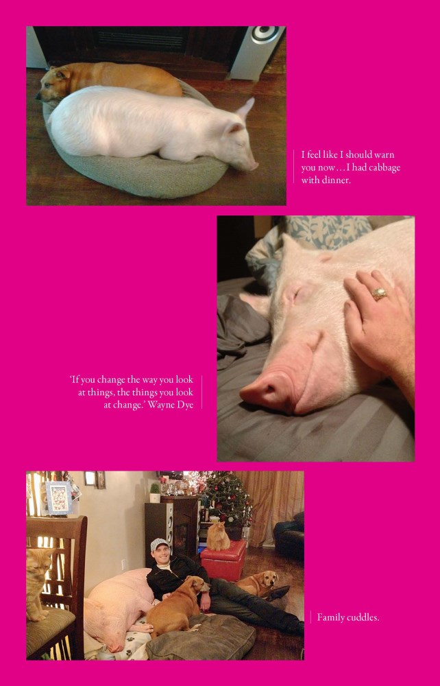 Esther The Wonder Pig Changing The World One Heart At A Time By