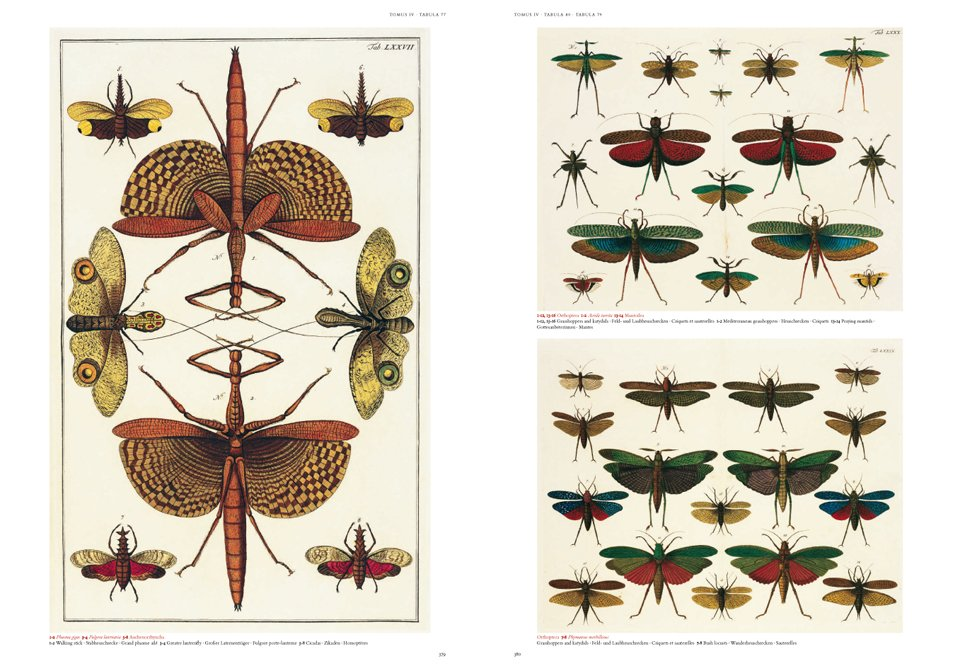 Beautiful Albertus Sebau0027s Cabinet Of Natural Curiosities, 25 By Albertus Seba |  9783836515832 | Booktopia
