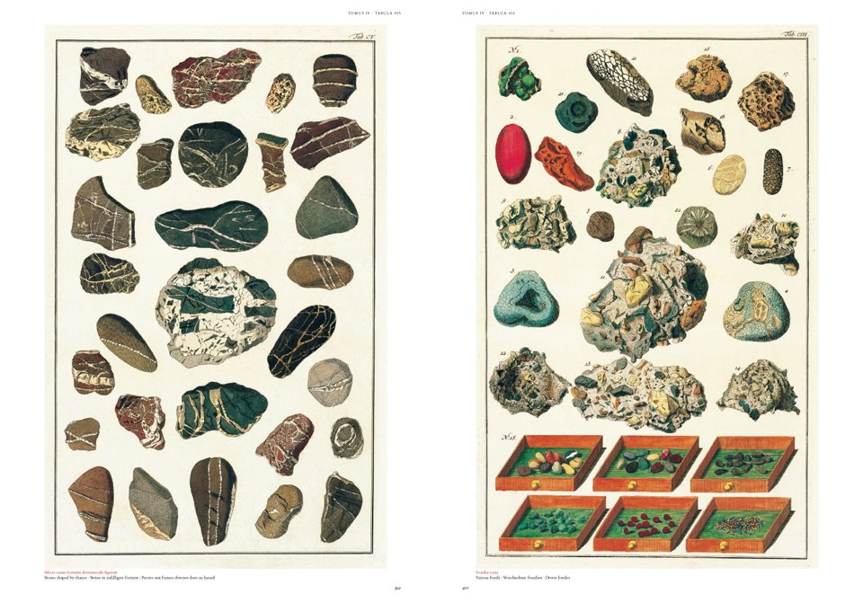 Booktopia - Albertus Seba's Cabinet of Natural Curiosities, 25 by ...
