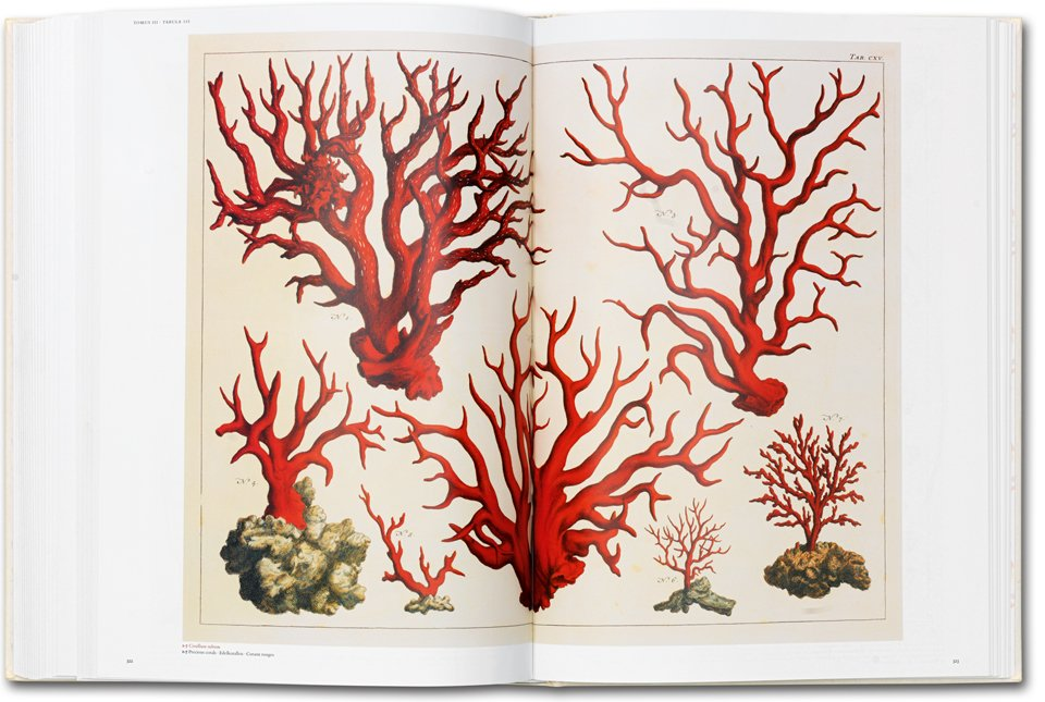 Good Albertus Sebau0027s Cabinet Of Natural Curiosities, 25 By Albertus Seba |  9783836515832 | Booktopia